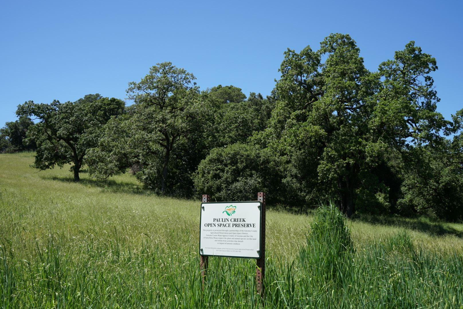 Field with tall green grass and Paulin Creek signage
