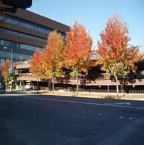 Image of facade with street in front, sidewalk, and maple trees