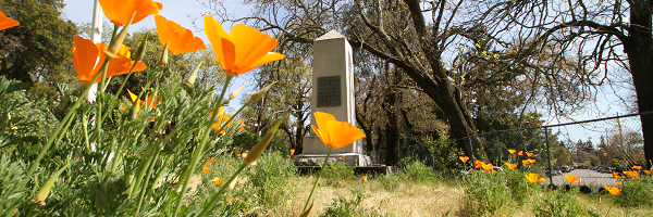 Flowers and Tombstone at Rural Cemetery