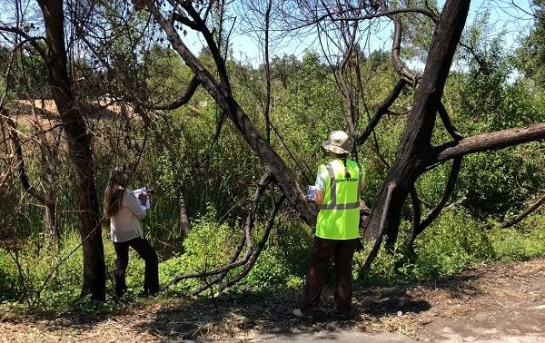 Trees Assessment in Fire Damaged Parks_news flash