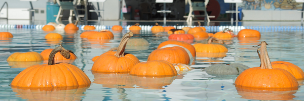 Pumpkins floating in pool