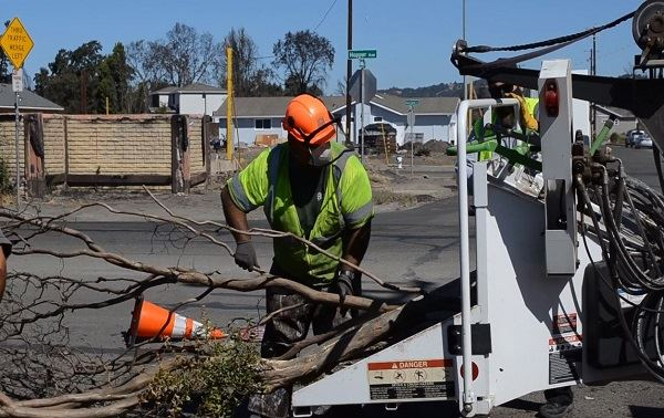 Hopper Ave Trees Removed_news flash