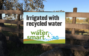 Recycled Water Newsflash