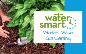 News Flash_Water Wise Gardening