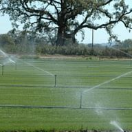 A field being watered by sprinklers.