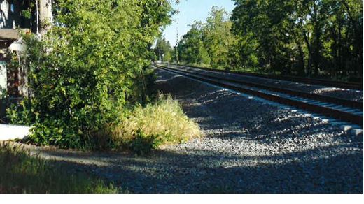 Railroad track and trees