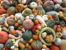 3rd Annual Heirloom Exposition 2013